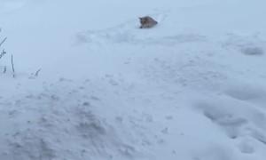Cat Isn't a Fan of First Snow