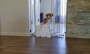 Lieutenant Dan the Two-Legged Dog Jumps Over TP