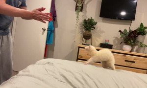 Happy Rescue Ferret Leaps into Owner's Arms