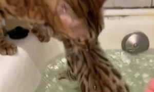 Kitty Rescues Kitten From Bathtub