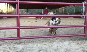 Doggo Make Graceful Jump Through Gap in Gate