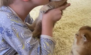 Kid Really Loves His Kittens