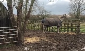 Horse Won't Be Held in by Fences