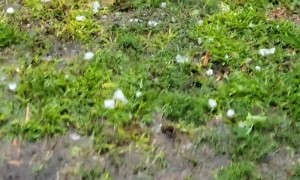 Storm Dumps Golf Ball Size Hail in Trinity Texas