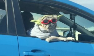 Riding in Style, this Chill Pooch Is