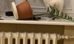 Cat Caught Tipping Potted Plant