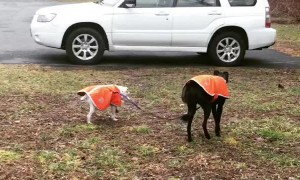 Seeing Eye Dog For a Blind Dog Buddy