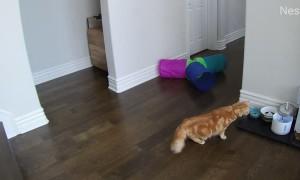 Cold Splash Scares Cat