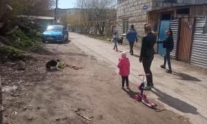 Territorial Cat Drives Dog Away