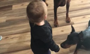 Toddler Teaches Dogs to Sit