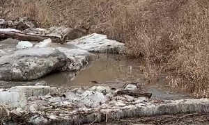 Deer Makes it to River Bank After Ice Breaks Up
