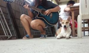 Guitar Strums Make Pup Sleepy
