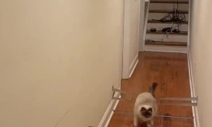 Cat Crushes Quarantine Workout Routine
