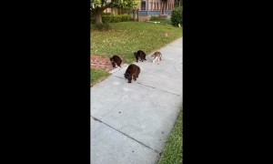 Cat Pack Unfriendly Towards Pooch