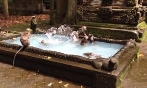 Monkeys Enjoy a Swim in Scenic Pool