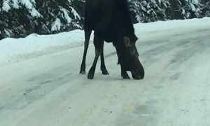 Late Winter Moose Block Road in Maine
