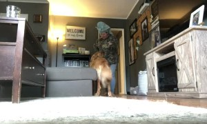 Dog in Training Takes the Treat