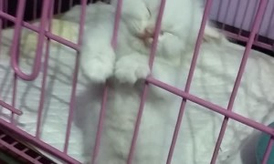 Kitten Falls Asleep Standing Against Kennel