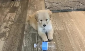 Puppy is totally confused when