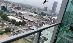A Quarantine Visit from a Hummingbird