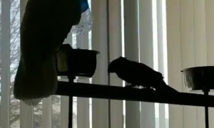 Playful Bird Boops Friend with Bottle
