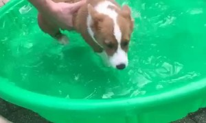 Puppy Learning to Swim in Mini Pool