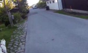 Athletic dog pulls owner on skateboard for walk time