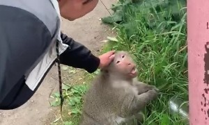 Monkey Scares a Woman