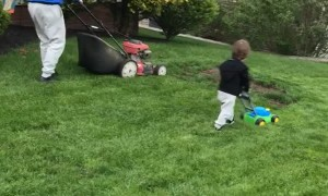 Toddler Follows Dad's Lead in Mowing the Lawn