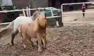 Cute horses plating around
