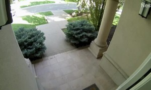 Dog Sprinting out Front Door has a Close Call