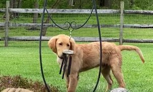 Wind Chimes Gets Pup Wound Up