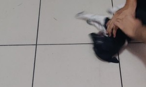 Playful Pup Enjoys Sliding under Bed