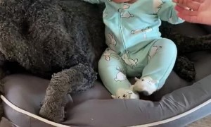 Dog Doesn't Like Easter Outfit As Much As Infant