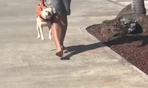 Man Carries Pooch Like a Purse