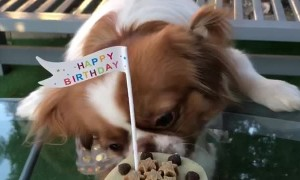 Cute Pooch Gets Birthday Cake