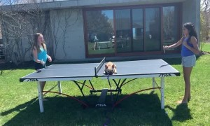 Pup Naps During Ping Pong