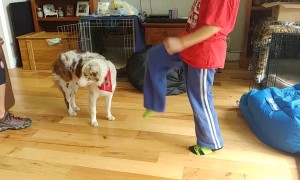 Dog Learns How to Pounce Like a Fox on Command