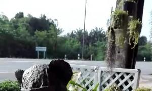 Cat Scuffles with Sculpture