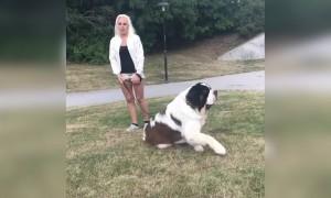 Such a huge dog still cute though!