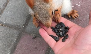 Cute Squirrel Came in Close for a Treat