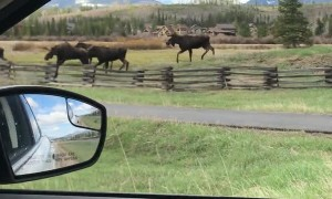 Traffic Jam in Fraser, Colorado