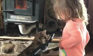 Kitten in Stroller Plays with Toddler