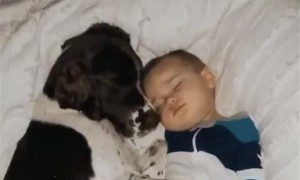 Dog and Baby Snuggling While Sleeping