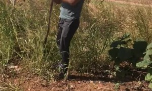 Catching a Wild Belt Snake