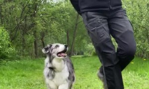 Synchronized Dance Routine With Doggy