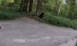 Motorcycle Rider's Friendly Black Bear Encounter