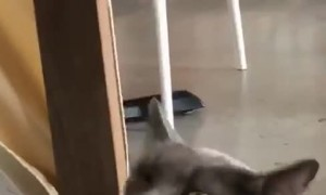 Cat Has a Sneezing Malfunction