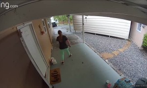 Great Dane Chases Delivery Man