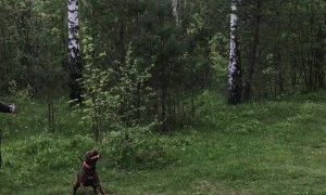 Dog Plays with a Balloon